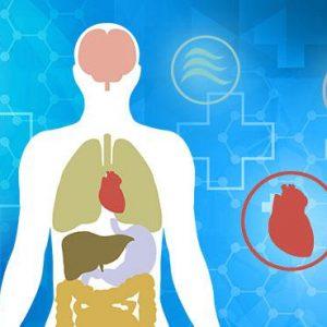 Human-Physiology